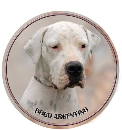 Dogo Argentino Car Window Sticker